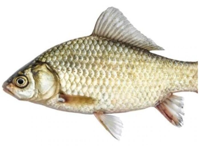Health Tips: Eating fish can also cause harm, keep these things in mind